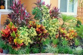 landscaping backyard landscaping ideas south florida