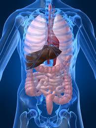 Penyakit Hepatitis
