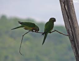 Animais ameaçados de extinção são resgatados em Fortaleza (CE ...