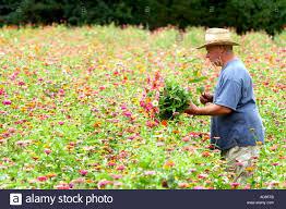 Flowers Plants by Man Picking Flowers Martha S Vineyard Guy Male Flower Flowers
