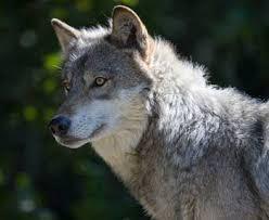 Earthquake(Loner Wolf Roleplay) Images?q=tbn:ANd9GcSAk1CyAyk91rOyazGrQfi7-kNPGTUy7DI7H7hU7NbXp43ItJ3qbQ