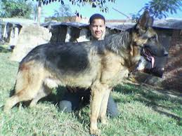 لمنع الغش في تجارت الكلاب كل نوع وصفاته Images?q=tbn:ANd9GcSB-lZl1ySgIxSr8Q0ir9QcSaJ_OjIXQ9Ofnq16sULP4HcFGYt6