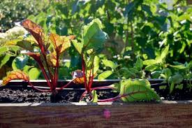 vegetable gardening in containers and small spaces