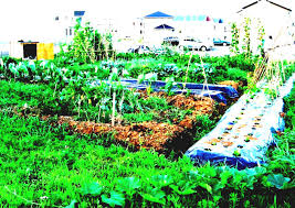 vegetable garden planner and design software gardening plans