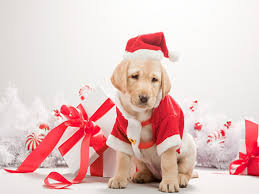 cute christmas wallpaper 6945190