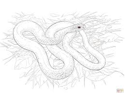 Belly Mapping Buttermilk Racer Snake Coloring Page Free Printable Coloring Pages