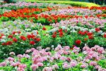 ดอกไม้สวยๆ ที่
