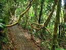 Panoramio - Photo of Tirimbina Rainforest Center (Costa Rica)