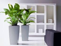 Office Desk Plants by Office Desk Wonderful Simple Office Design Ideas Home Office
