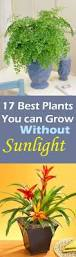 best 25 indoor plants low light ideas on pinterest indoor plant