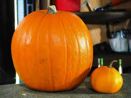 halloween pumpkin carving a large pumpkin eating a small pumpkin
