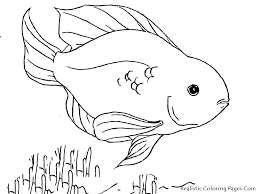 printable 28 tropical fish coloring pages 5123 tropical coloring