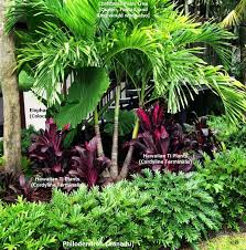 best 25 florida plants ideas on pinterest florida landscaping