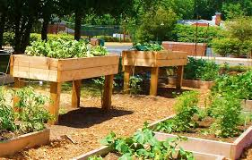 Planning A Raised Bed Vegetable Garden by Cool Cedar Raised Garden Beds Designs How To Make A Raised Bed