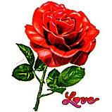 http://t2.gstatic.com/images?q=tbn:ANd9GcSHKULoazqupRscvbwQ8owt4M7wzR4_55RjWmprvIEtm8F8u9D2