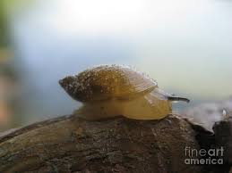 Sandy Snail Photograph - Sandy Snail Fine Art Print - sandy-snail-mariah-stone