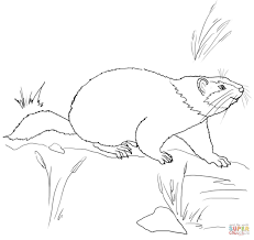 cute groundhog coloring page free printable coloring pages