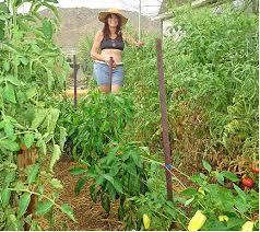 gorgeous southern vegetable garden black goldhigh desert vegetable