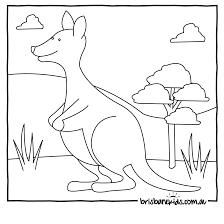 australian animals colouring pages u2022 brisbane kids