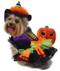 Dog Costumes Halloween 53 Cutest Halloween Costumes Dogs Dog Halloween