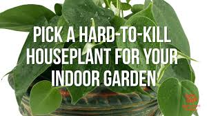 5 hardy hard to kill houseplants for apartments with low light