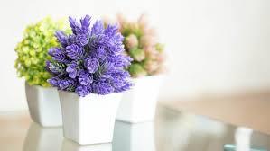 pretty indoor flowering plants today com