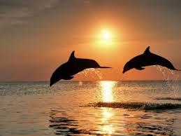 Los maestros debemos ser como los delfines: