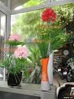 shop <b>hoa</b> voan - Quà tặng, trang trí cho ngôi nhà của bạn | Muare <b>...</b>