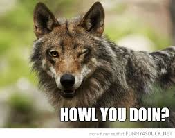 Howl You Doin? | Funny As Duck | Funny Pictures