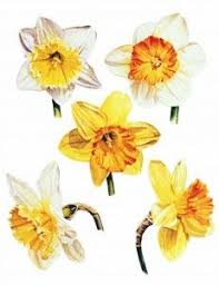Flowers For Each Month - although this image displays one particular flower for each month