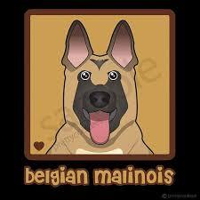 belgian sheepdog national specialty 2018 16 best dog care tips images on pinterest dog care tips dogs
