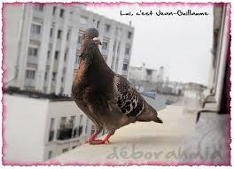 Pigeons Images?q=tbn:ANd9GcSMrW3pwTkabDW0ZaZn0BeThqKIulnj7H3g7JN18NzKR6j9C3Weuw
