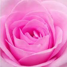 اجمل معانى الحب هى الورد Images?q=tbn:ANd9GcSMthI3pOUgN8NeO83K_t36pF3KBl_M664tMeg_szA6yzcMBt2e&t=1