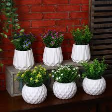 Best Office Desk Plants Best Office Plants Nz Peace Lily U0027mauna Loau0027 Best Desk