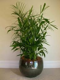fresh beautiful small indoor plants 23198