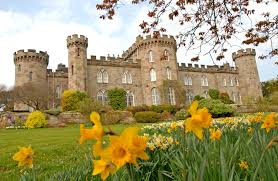 Castles Crowns And Cottages by Daffodils And Castle Front