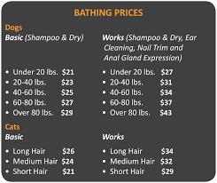 bathing u0026 grooming cityvet
