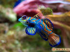 2013 год для Рыб по зодиаку
