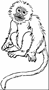 incredible squirrel monkey coloring pages with monkey coloring