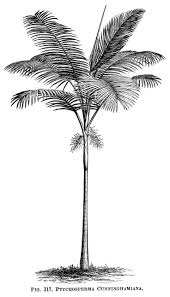 best 25 palm tree drawing ideas only on pinterest how to paint