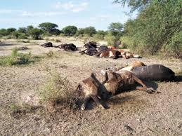 Sequía en el norte santafesino: Otro Famatina en el país