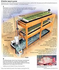 Best Aquaponic Images On Pinterest Aquaponics System - Backyard aquaponics system design