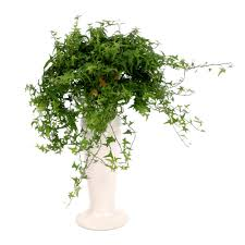 Best Office Desk Plants 10 Best Houseplants To De Stress Your Home And Purify The Air
