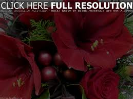 Home Decorators Collection Coupon Code Christmas Flowers Images U2013 Happy Holidays