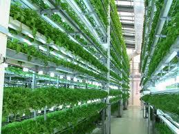 news press connecticut homegrown hydroponics