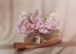 free images branch flower petal glass vase decoration