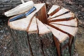 White Oak Bark There U0027s Oak Then There U0027s Riven Oak Peter Follansbee Joiner U0027s Notes