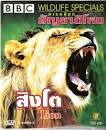 iq-kid สื่อการเรียนสำหรับเด็ก : สิงโต สารคดี Lion Wildlife ...