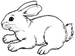 coloring pages of tools the 25 best bunny coloring pages ideas on pinterest easter