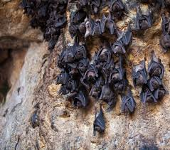 12 images and facts about misunderstood bats mnn mother nature